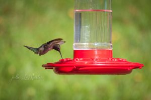 This photo shows a hummingbird on a hummingbird feeder