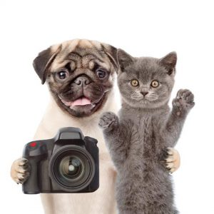 This photo shows a dog and a cat with a camera